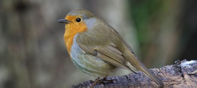 New research says: 'Feeling stressed? Watch more birds!'