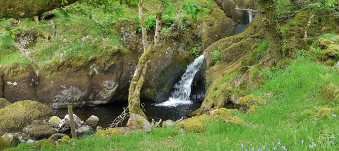 Rewilding the Mind – 3 day retreat at Trigonos, Snowdonia