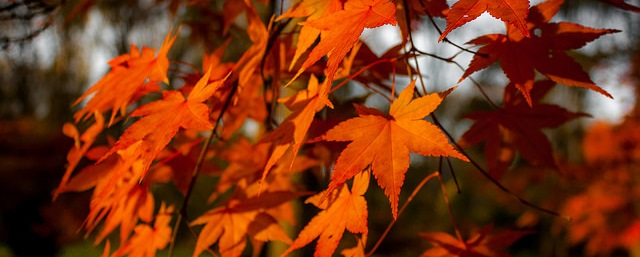 Autumn workshop dates announced!