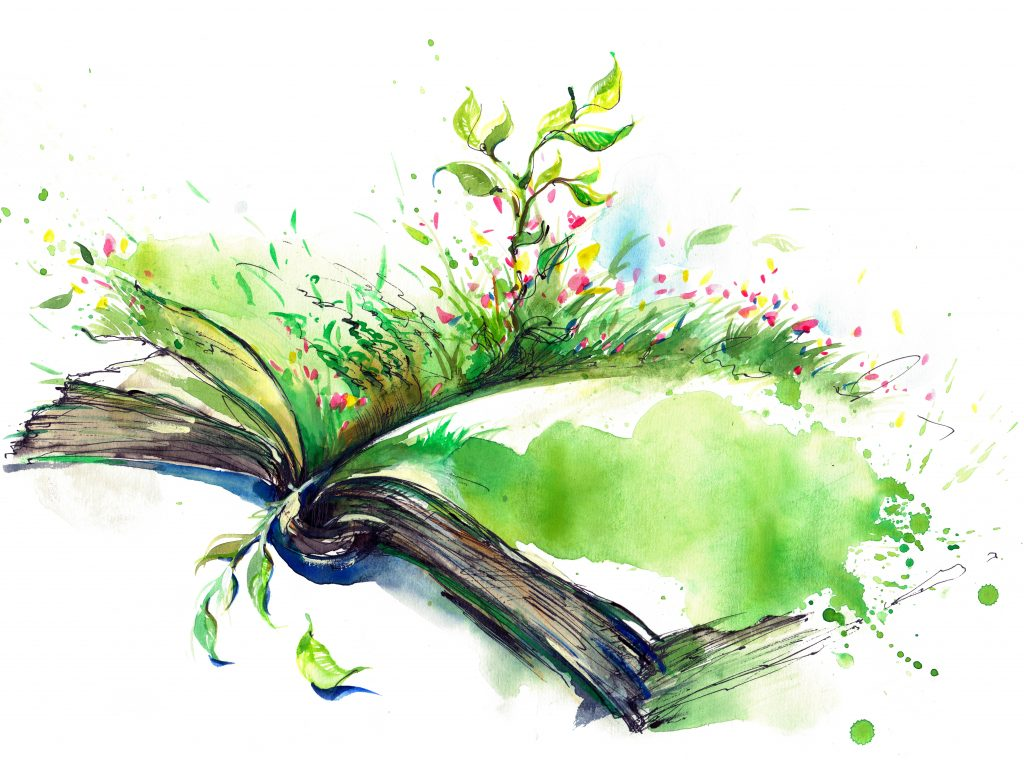 How Mindfulness And Storytelling Help >> My Story Our World Mindfulness Of Nature