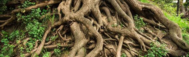 Our wild, strong roots
